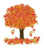 Autumn Tree. A drawing of a tree containing multicolored autumn leaves that are falling to the ground Royalty Free Stock Photo