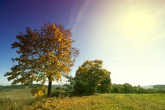 Autumn Tree with Empty Space on Sky stock image