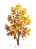 Autumn tree. With falling leaves Stock Photo