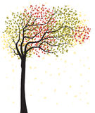 Autumn tree with falling leaves. Vector illustration of autumn tree with falling leaves on a white background Vector Illustration