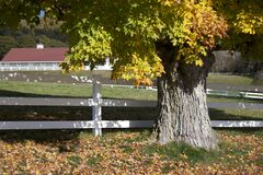 Autumn tree and fence Royalty Free Stock Image