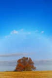 Autumn tree in the field. The lonely tree which has been removed on autumn day in field of Stock Images