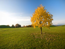 Autumn tree on field stock images