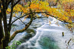 Autumn tree and flowing creek Royalty Free Stock Photography