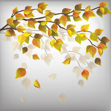Autumn tree with flying leaves, nature background Royalty Free Stock Photo