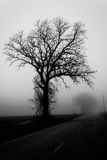 Autumn Tree in Fog. Black and white photo of a tree in the farmland of LaPorte County, Indiana on a foggy day royalty free stock photo