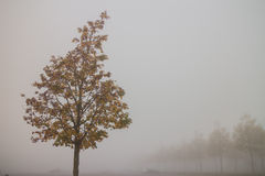 Autumn tree in fog Stock Photo