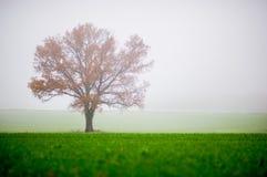 Autumn tree. Fog leaf meadow Royalty Free Stock Image