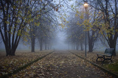Autumn tree in fog royalty free stock photography