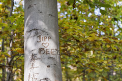 Autumn tree in forest with graffiti. Illicit graffiti scars the trunk of a tree in an autumn forest landscape Stock Image