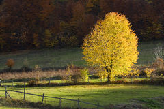 Autumn tree on a glade Stock Images