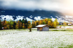 Autumn tree, grass and first snow with cloudy sky and mountains. On background stock photography