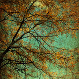 Autumn Tree Grunge royaltyfria foton
