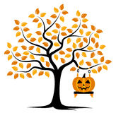 Autumn tree and halloween pumpkin Royalty Free Stock Photo
