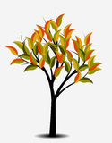 Autumn tree,  illustration Royalty Free Stock Photo