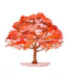 Autumn tree illustration. Watercolor painting Stock Photos