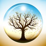Autumn tree inside glass globe Royalty Free Stock Image