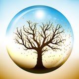 Autumn tree inside glass globe Royalty Free Stock Image