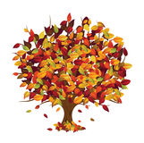 Autumn tree (isolated) Stock Photos