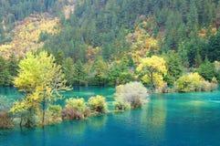 Autumn tree and lake Stock Photos