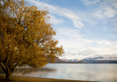 Autumn Tree and Lake Royalty Free Stock Photography