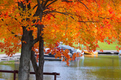 Autumn  tree by the lake Stock Image