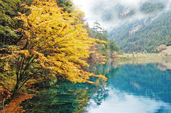 autumn tree lake in jiuzhaigou Royalty Free Stock Image
