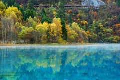Autumn tree and lake in jiuzhaigou Stock Images