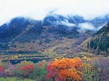 Autumn tree and lake  in Jiuzhaigou Stock Photography