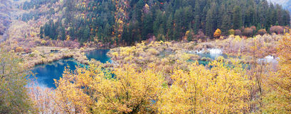 Autumn tree and lake  panorama  in Jiuzhaigou Royalty Free Stock Image