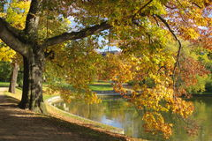 Autumn tree by lake in park Stock Photos