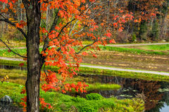 Autumn Tree and Lake By the Rural Road Royalty Free Stock Image