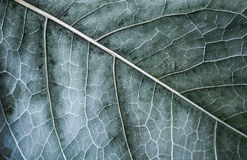 Free Autumn Tree Leaf, Macro Photo With Selective Focus Stock Image - 45896191