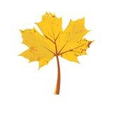Autumn tree leaf Royalty Free Stock Image