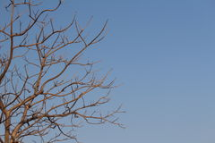 Autumn. The Tree is leafless not lifeless. Clear Sky has its own beauty Stock Photography