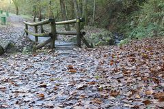 Autumn tree leafs and waterfall water. Autumn tree leafs , autumn path Royalty Free Stock Photo