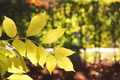 Autumn. Tree leaves stock photography