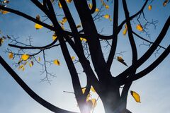 Autumn tree leaves Royalty Free Stock Photography