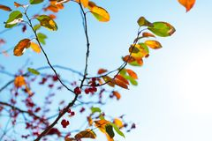 Autumn Tree Leaves Background variopinto fotografia stock