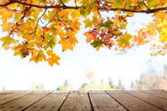 Autumn Tree Leaves Background variopinto fotografia stock libera da diritti