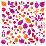 Autumn tree leaves, botany and eco flat images. Vector illustrat Royalty Free Stock Photography