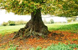 Fallen leaves. Leaves gathered around the trunk of an ancient tree Stock Photography