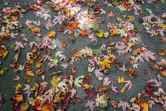 Autumn Tree Leaves on Ground Royalty Free Stock Photos