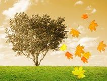 An autumn tree. Leaves illustration Stock Photos