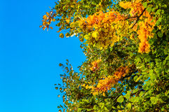 Autumn tree leaves landscape Royalty Free Stock Photos