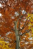 Autumn tree leaves Stock Photos