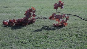 Autumn tree leaves pile grass stock video