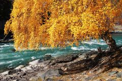 Autumn tree leaves Stock Photography