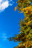 Autumn tree leaves sky clouds copy space frame Stock Photos