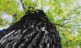 Autumn tree Stock Photography